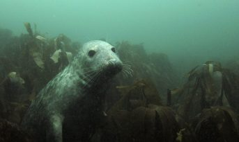 Seal at Farnes