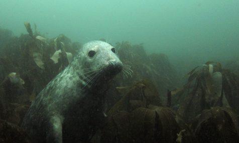 Seal at Farnes