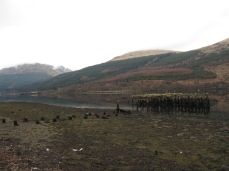 The old pier opposite The Pit Stop Cafe at Loch Long. A great training dive spot but only at high tide.