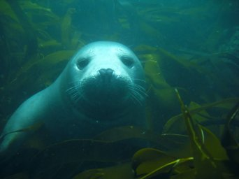 Friendly seal at Isle of May
